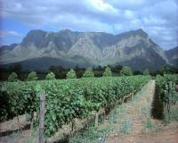 The Cape Winelands